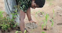 Overuse of fertiliser has caused environmental degradation