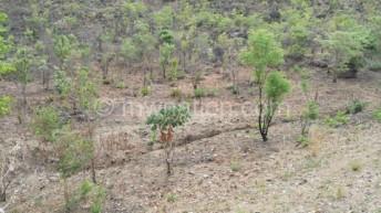 Forestry department blamed for deforestation