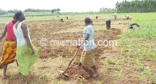 Some of the land distribution beneficiaries captured tilling 'their' land on Thursday