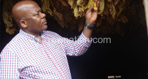 Munthali admiring flue cured leaf on Saturday in Thyolo