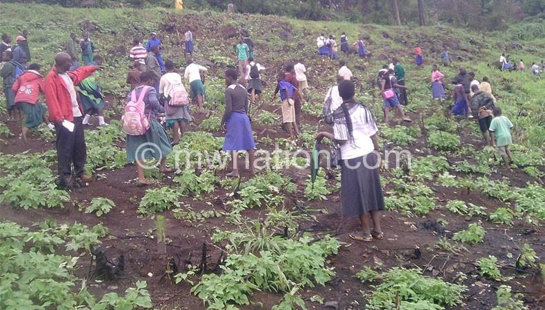 School_tree_planting