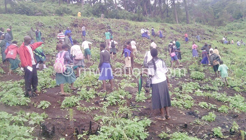 Pupils planting trees