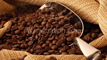 Mzuzu Coffee, twin deal bears fruits
