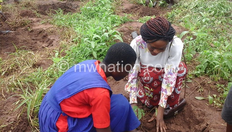 MSB_planting_trees