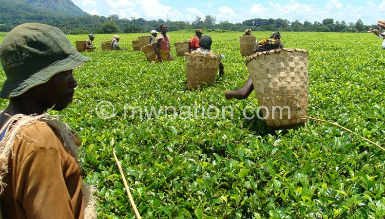 Tea is one of the country's export commodities