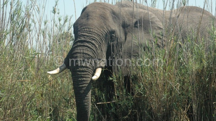 Elephants on the rampage in Machinga