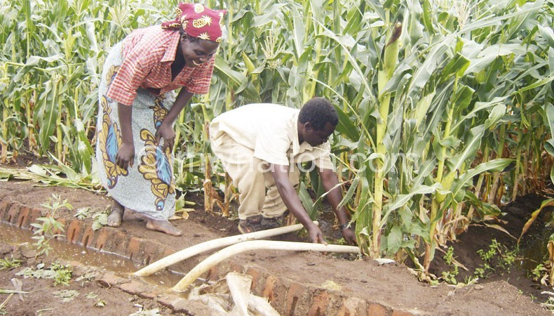 Irrigation farming allows for multiple harvests