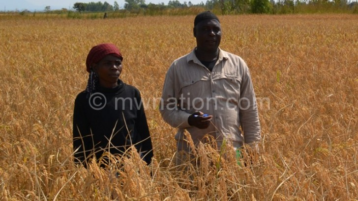 Banks ready to support Mtalimanja rice project