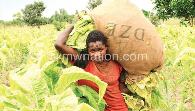 Over production of tobacco affected prices