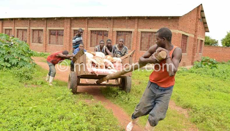 Govt has banned movement of pigs from Nsanje