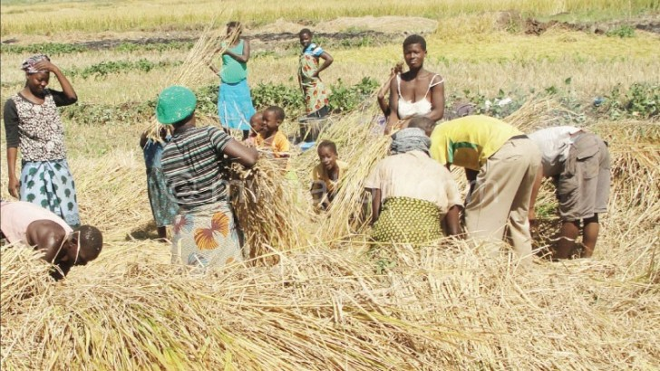 Experts propose new agriculture statutory body, council