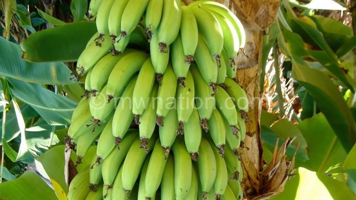 Hope for banana farmers
