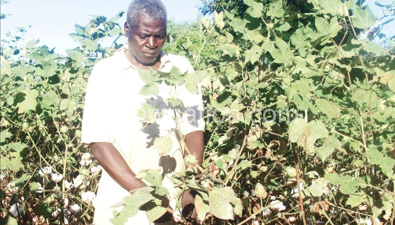 Malawi cotton farmers to profit from low supply