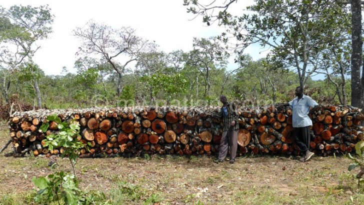 Government to deal with illegal indigenous wood markets