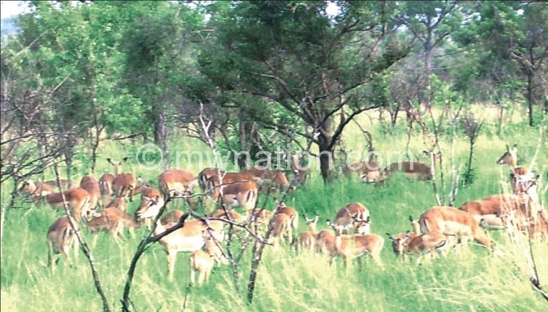 Wildlife_malawi