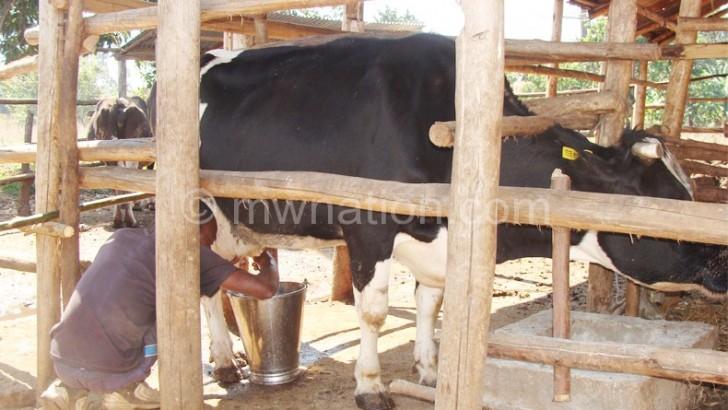 Luanar boosts milk production
