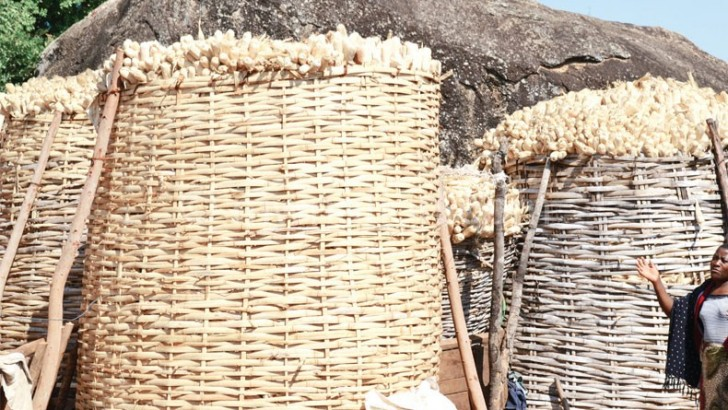 Malawi's food security improves—report
