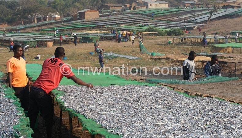 In some areas mosquito nets are used for drying fish