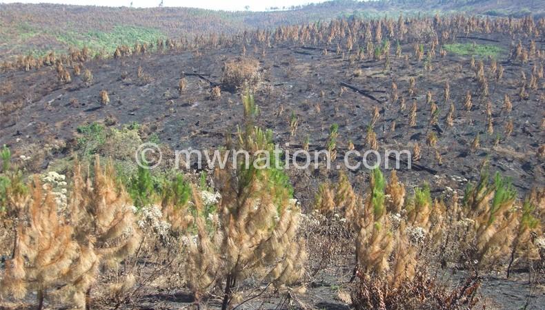 Tree_burning_deforestation