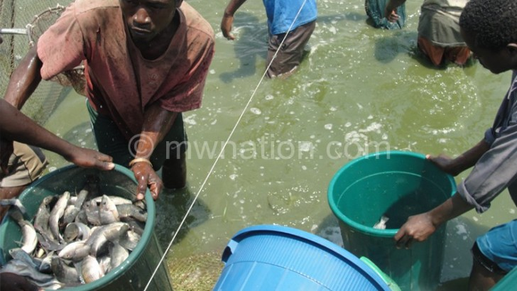 Fish farmers cry for feed subsidy
