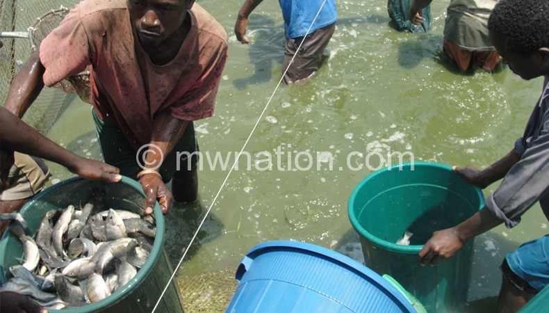 Workers at Maldeco aquaculture harvesting fish