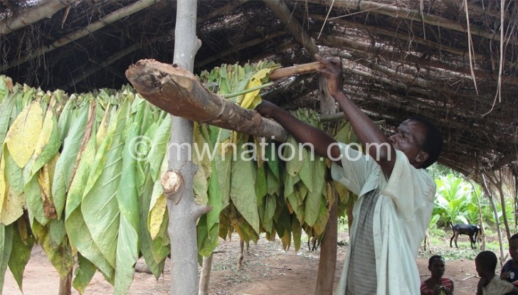 Unlike soya, groundnuts and sunflower, tobacco is labour intensive