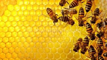 Demand for honey on the rise, says firm