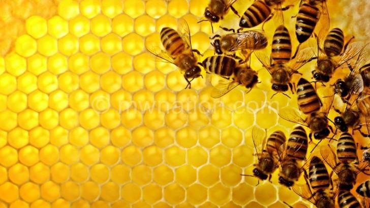 Salima-based honey cooperative posts K2.6m profit