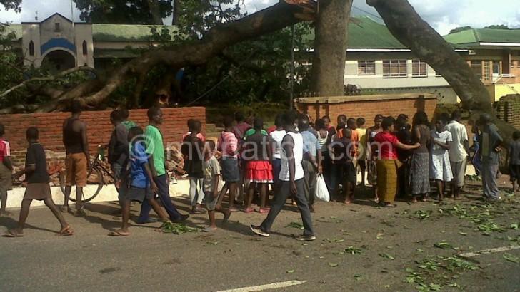 Tree kills two, injures seven in Zomba