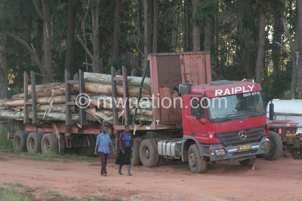 Truckload of logs at Raiply