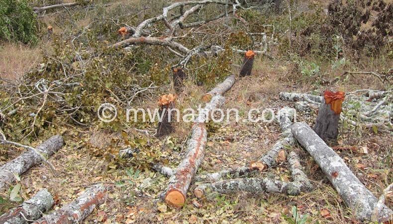 Deforestation worsens climate change effects