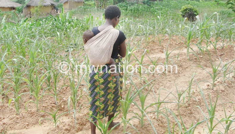 Climate change is causing erratic rains which affects food production