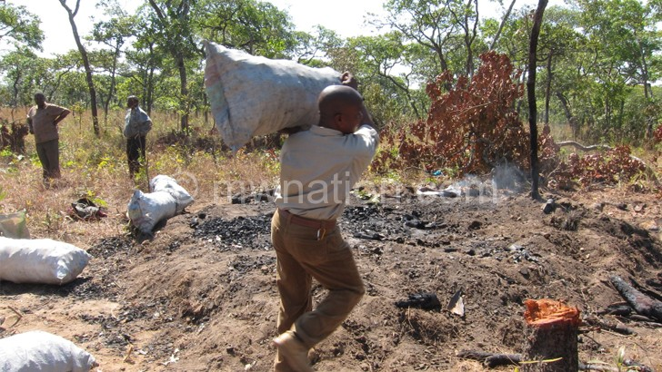 'Poverty no excuse for forestry plunder'