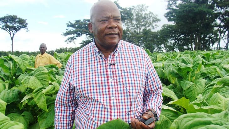 Govt finds hope in dark-fired tobacco
