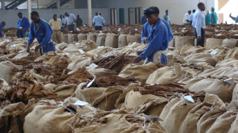 Itching for farmers satisfaction in tobacco sales