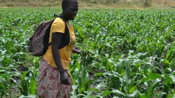 Saving drying irrigation  dream