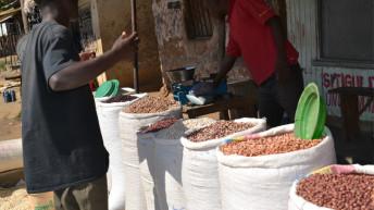 Legume farmers anticipate better prices
