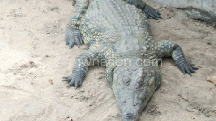 Some Karonga residents believe the crocodile attacks are man made