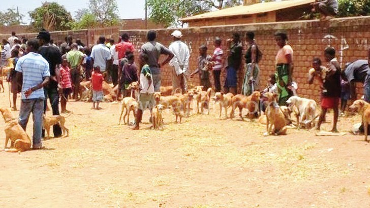 Many residents took their dogs for vaccination