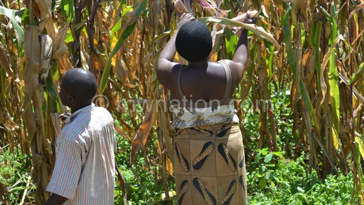 Govt scraps seed subsidy