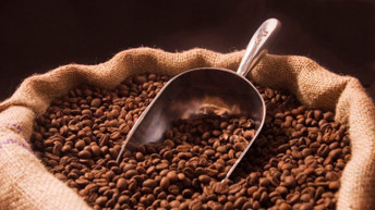 Malawi coffee courts 9 international buyers