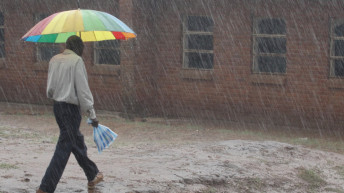 Rains start as familiar pest prowl