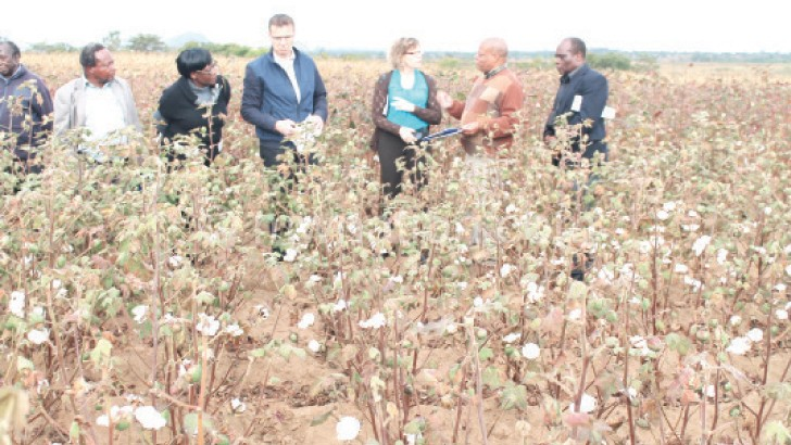 Defaults on loans by farmers has affected the production of cotton