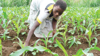 Hope for Malawi farmers as seed policy is in offing