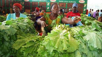 140 000 Malawi women farmers eye SA markets