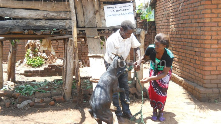 The initiative includes goat rearing