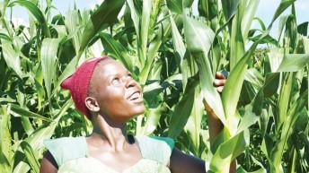 Draft seed policy risks marginalising smallholder farmers
