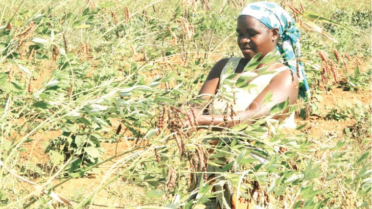Double up technology using legumes can improve crop yields