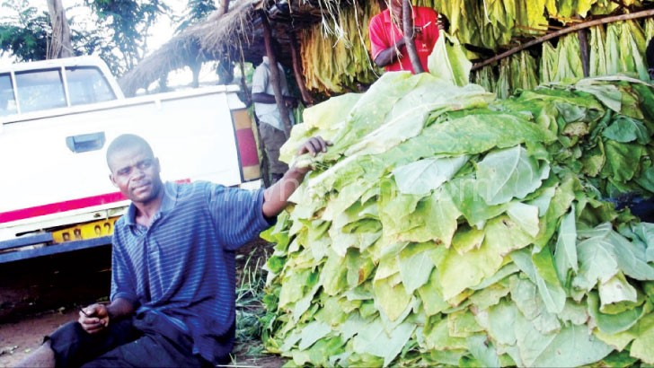 Shawa handling his leaf at home