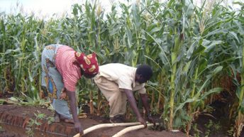 Govt asked to intensify irrigation farming amid drought scare